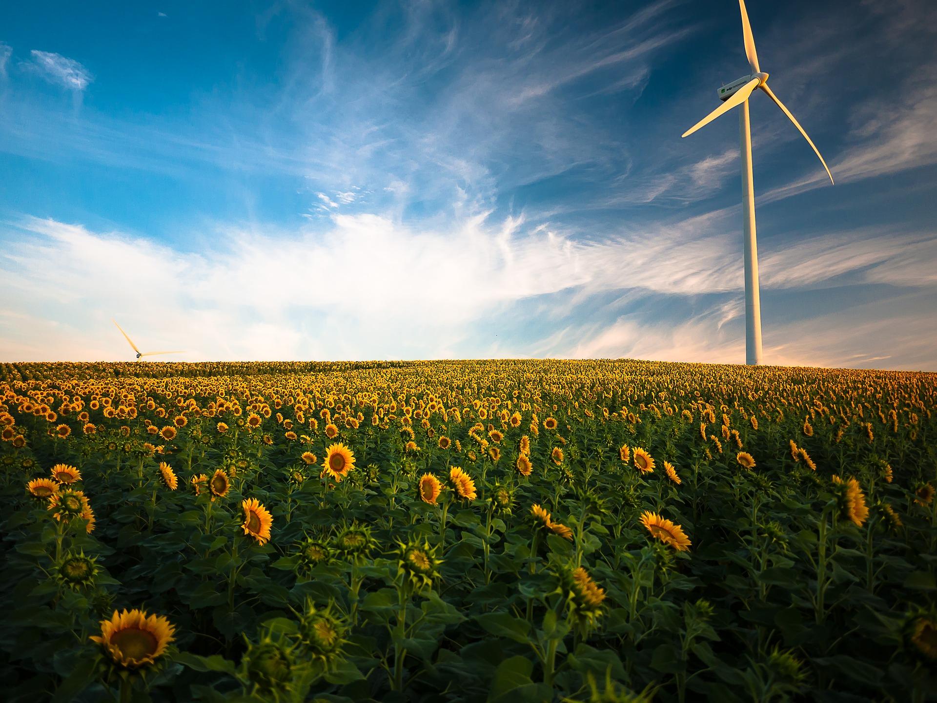 Yeni Rapor: Elektrik sektörü kaynaklı küresel CO2 emisyonları rekor düşüş gösterdi